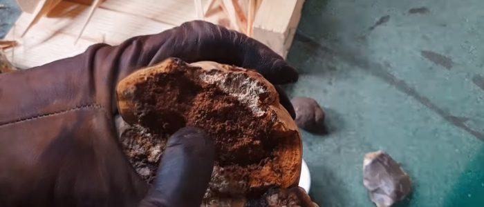 Une main gantée tient un champignon amadouvier